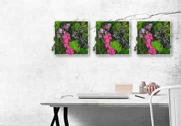 3 częściowy zestaw Botanika
