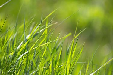 Trawy i paprocie